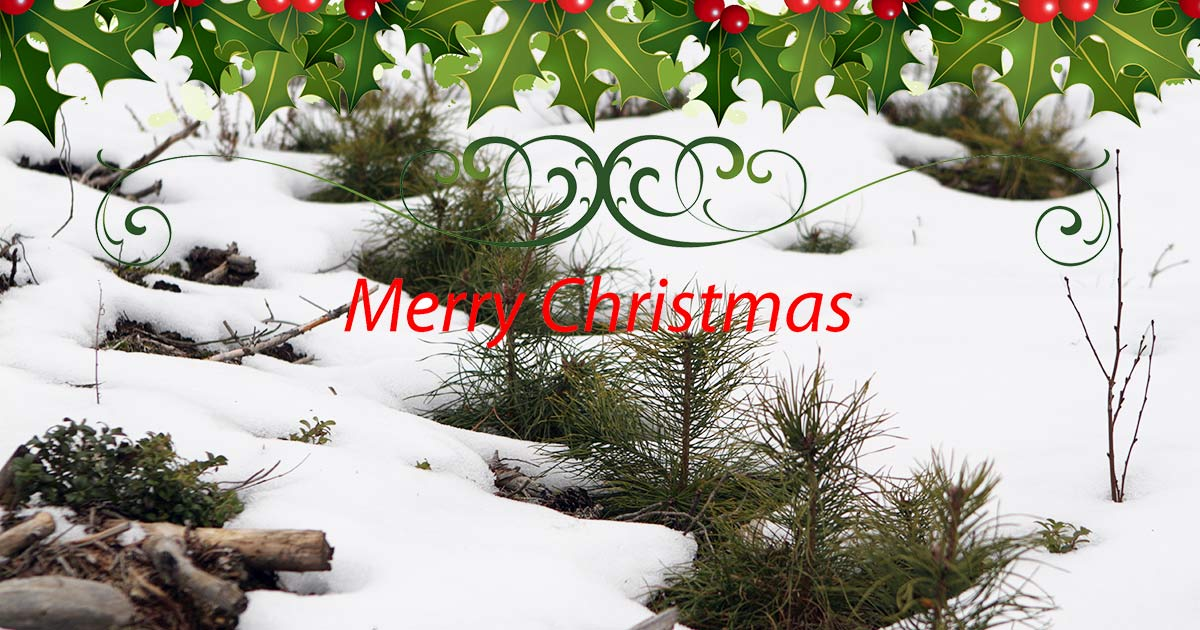 merry christmas and a happy new year bracke forest