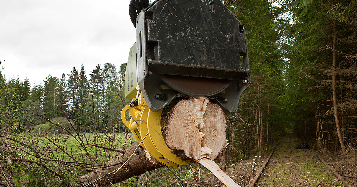 Bracke-Forest-Felling-heads-C16-c-07.jpg
